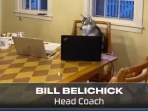 Bill Belichick's dog Nike sitting at the table during the NFL Draft